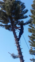 North Port Tree remvoval arborist