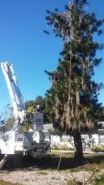 Sarasota Tree remvoval trimming