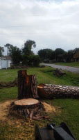 Port Charlotte Tree remvoval limb