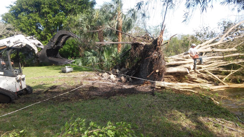 Port Charlotte Tree Service Storm Tree Cleanup tree services