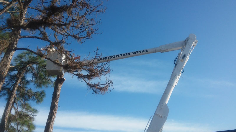 Port Charlotte Tree Service Dead Tree Removal
